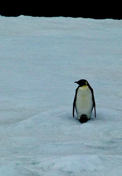 Antarctica & Argentina - 1/2012